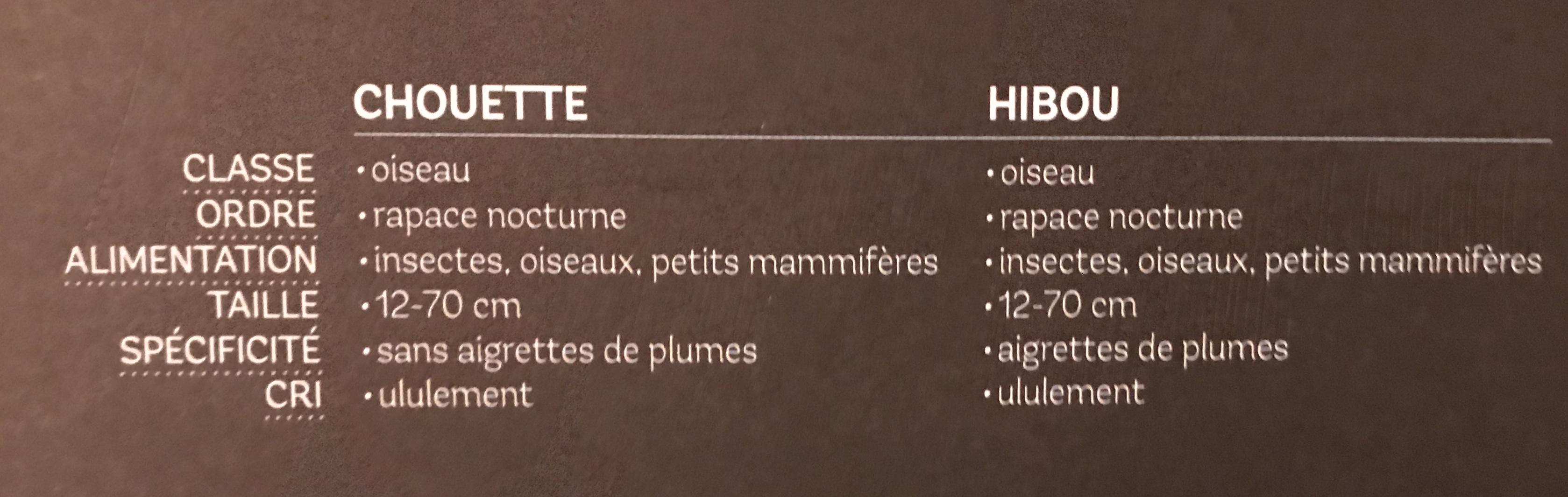 Chouette ou hibou 7