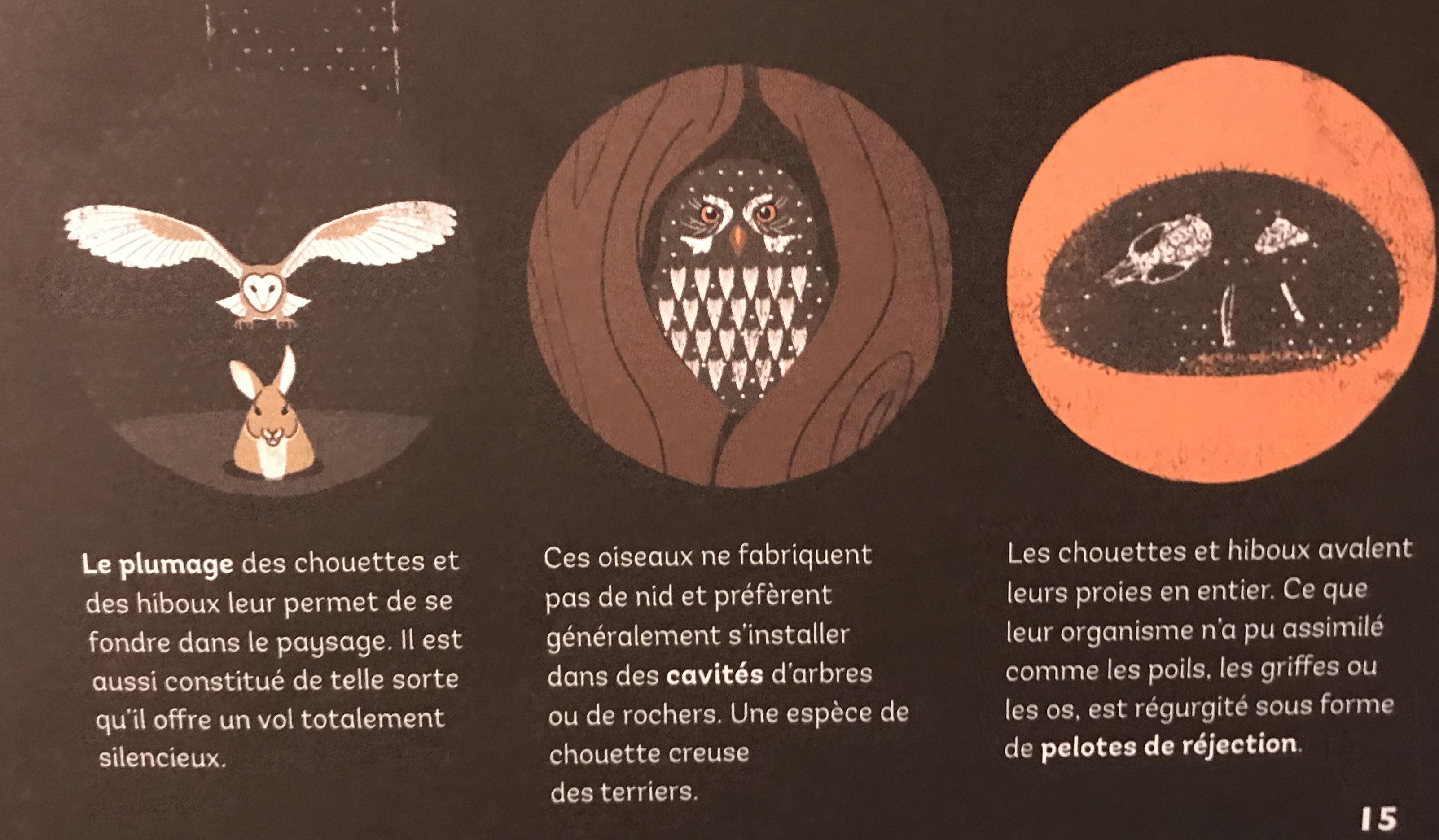 Chouette ou hibou 8